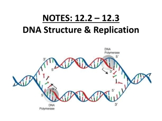 NOTES: 12.2 – 12.3 DNA Structure & Replication
