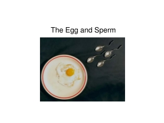 The Egg and Sperm