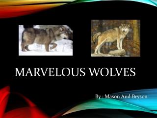 Marvelous Wolves