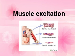 Muscle excitation