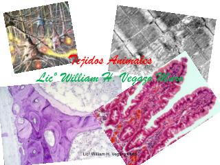 Tejidos Animales  Lic  William H. Vegazo Muro