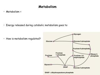 Metabolism Metabolism =  Energy released during catabolic metabolism goes to: How is metabolism regulated?