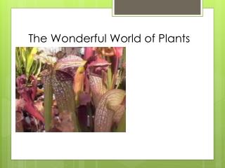 The Wonderful World of Plants