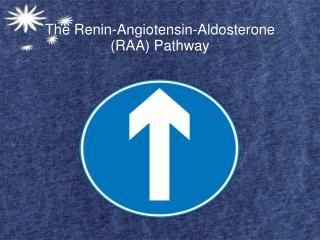 The Renin-Angiotensin-Aldosterone (RAA) Pathway