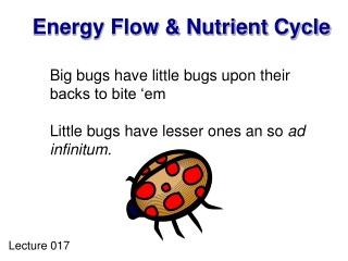 Energy Flow & Nutrient Cycle
