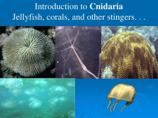 Introduction to  Cnidaria Jellyfish, corals, and other stingers. . .