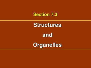 Structures and Organelles