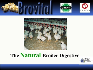 The  Natural  Broiler Digestive