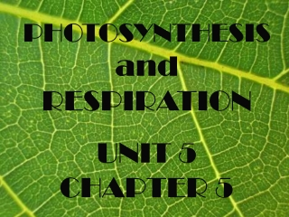 PHOTOSYNTHESIS and RESPIRATION UNIT 5 CHAPTER 5
