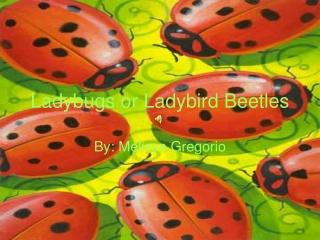 Ladybugs or Ladybird Beetles