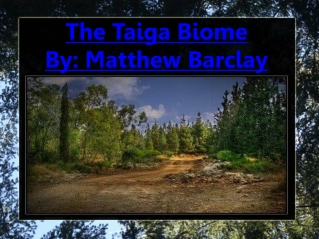 The Taiga Biome By: Matthew Barclay