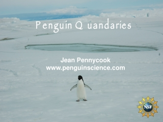 Penguin Quandaries