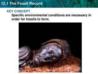 KEY CONCEPT  Specific environmental conditions are necessary in order for fossils to form.