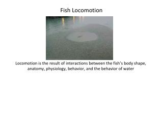 Fish Locomotion