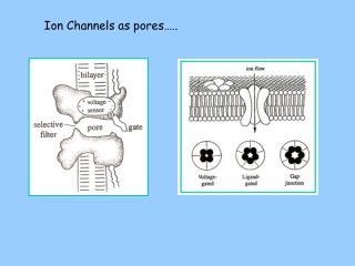 Ion Channels as pores…..
