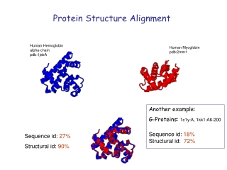 Protein Structure Alignment
