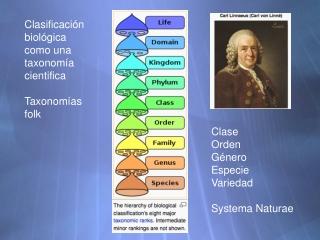 Clasificaci ón biológica como una taxonomía cientifica Taxonomías folk