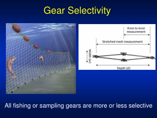Gear Selectivity