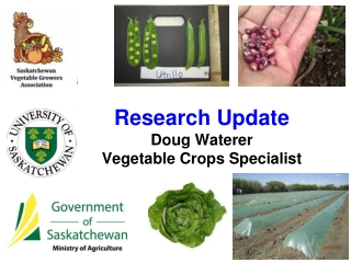 Research Update  Doug Waterer Vegetable Crops Specialist