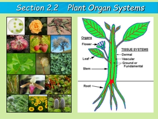 Section 2.2    Plant Organ Systems
