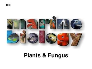 Plants & Fungus