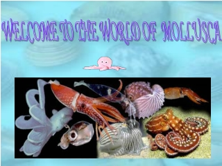 WELCOME TO THE WORLD OF  MOLLUSCA