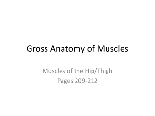 Gross Anatomy of Muscles