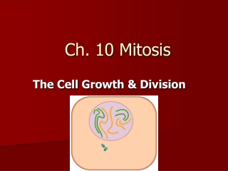 Ch. 10 Mitosis