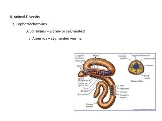 II. Animal Diversity    a. Lophotrochozoans 3. Spiralians – wormy or segmented