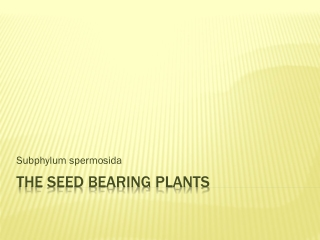The seed bearing plants