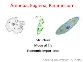 Amoeba, Euglena, Paramecium.