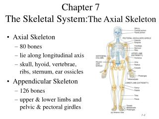 Chapter 7 The Skeletal System: The Axial Skeleton
