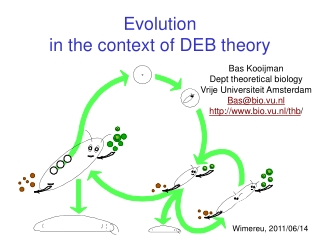 Evolution  in the context of DEB theory
