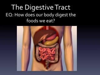 The Digestive Tract EQ: How does our body digest the foods we eat?