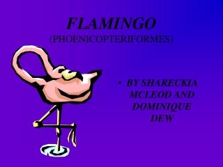 FLAMINGO (PHOENICOPTERIFORMES)