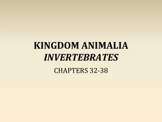KINGDOM ANIMALIA INVERTEBRATES