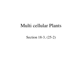 Multi cellular Plants