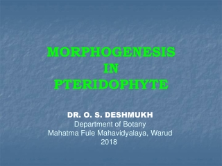 MORPHOGENESIS  IN  PTERIDOPHYTE