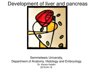 Development of liver and pancreas