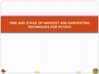 TIME  AND STAGE OF HARVEST AND HARVESTING TECHNIQUES FOR POTATO