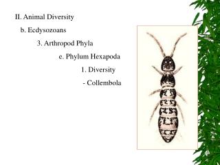 II. Animal Diversity    b. Ecdysozoans 3. Arthropod Phyla e. Phylum Hexapoda 1. Diversity