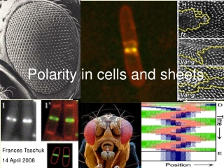 Polarity in cells and sheets