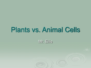Plants vs. Animal Cells