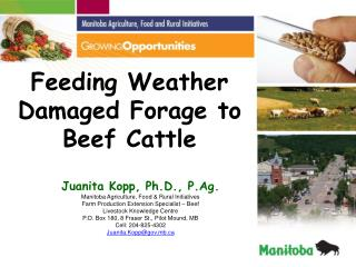 Feeding Weather Damaged Forage to  Beef Cattle