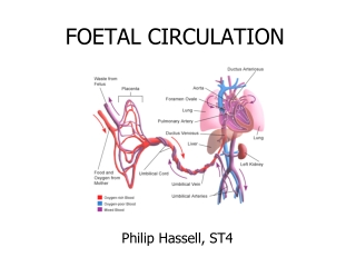 FOETAL CIRCULATION
