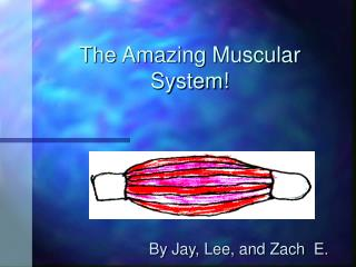 The Amazing Muscular System!