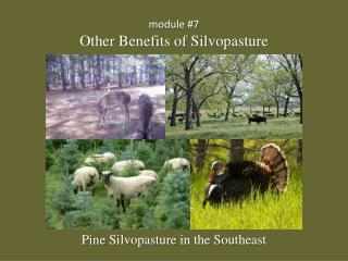 module #7 Other Benefits of Silvopasture