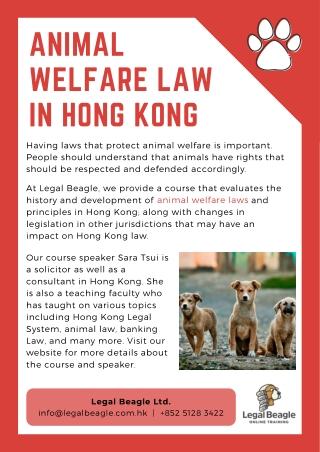 Animal Welfare Law in Hong Kong