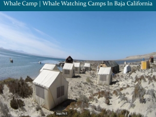 Whale Camp | Whale Watching Camps In Baja California