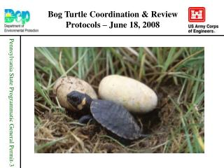 Bog Turtle Coordination & Review Protocols – June 18, 2008